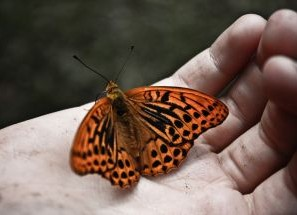 a-hand-full-of-butterflies-2-1078652-m